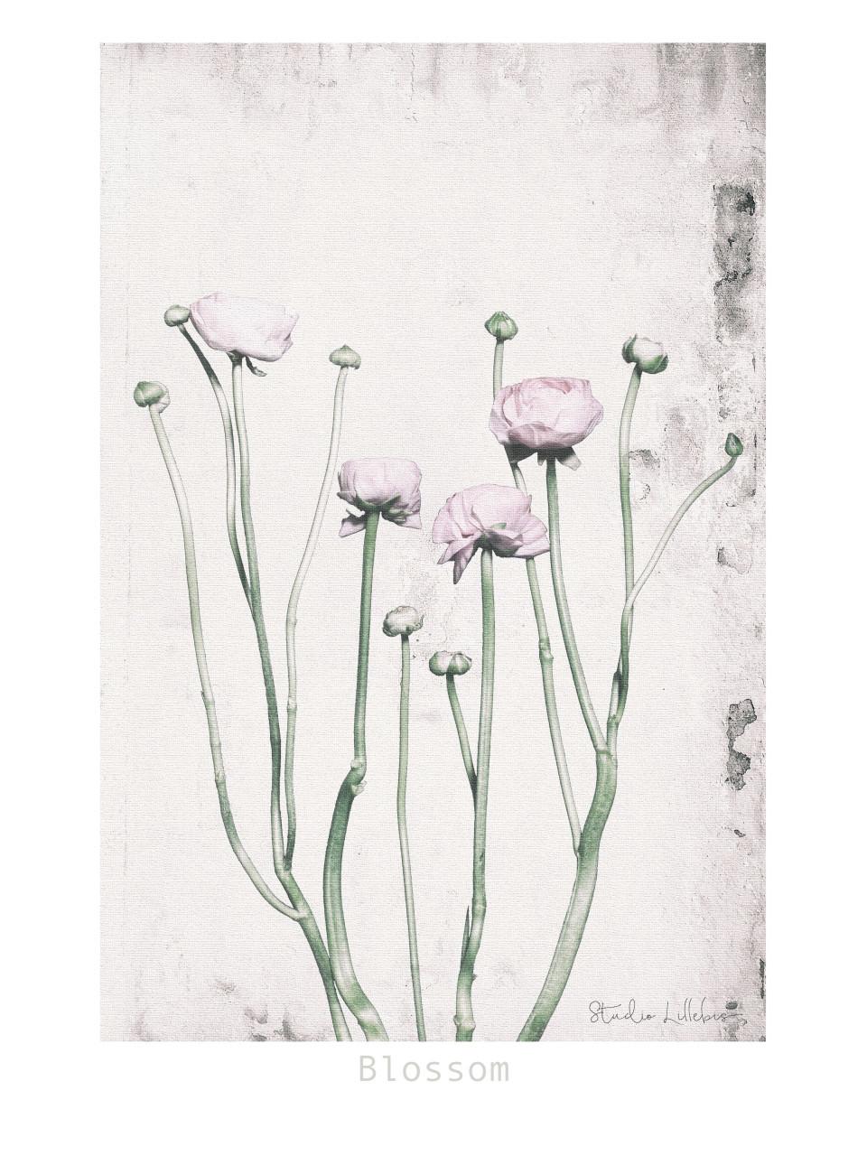 Blossom-30x40